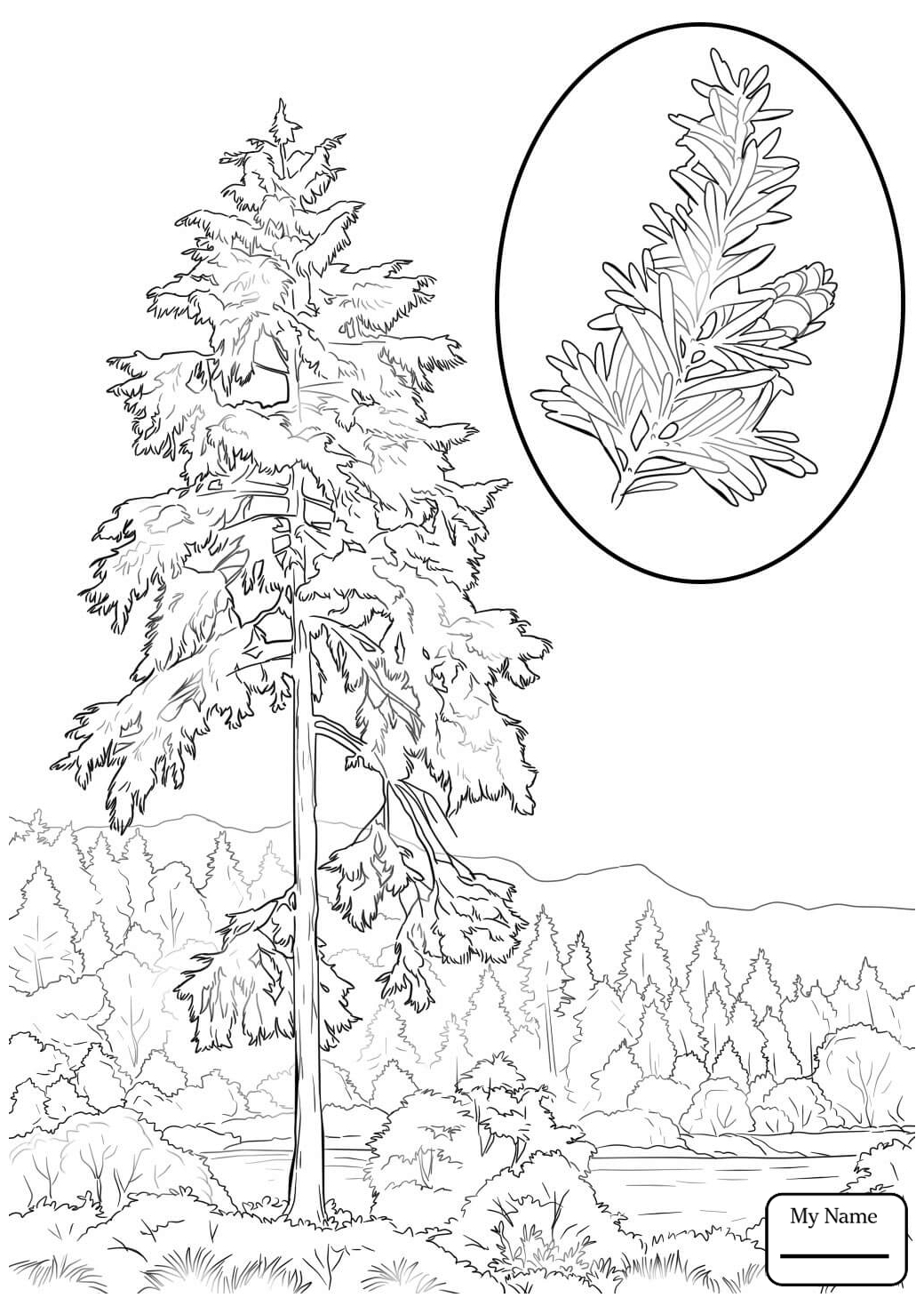 1040x1469 Hemlock Tree Coloring Pages Printable Coloring For Kids