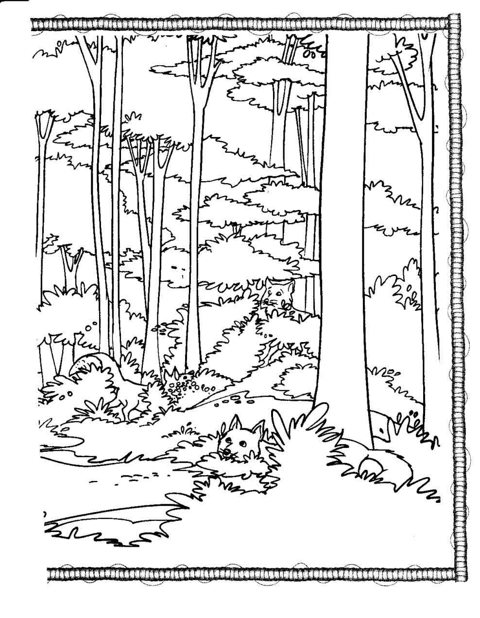 988x1272 Redwood Forest Coloring Page Online Coloring Printable