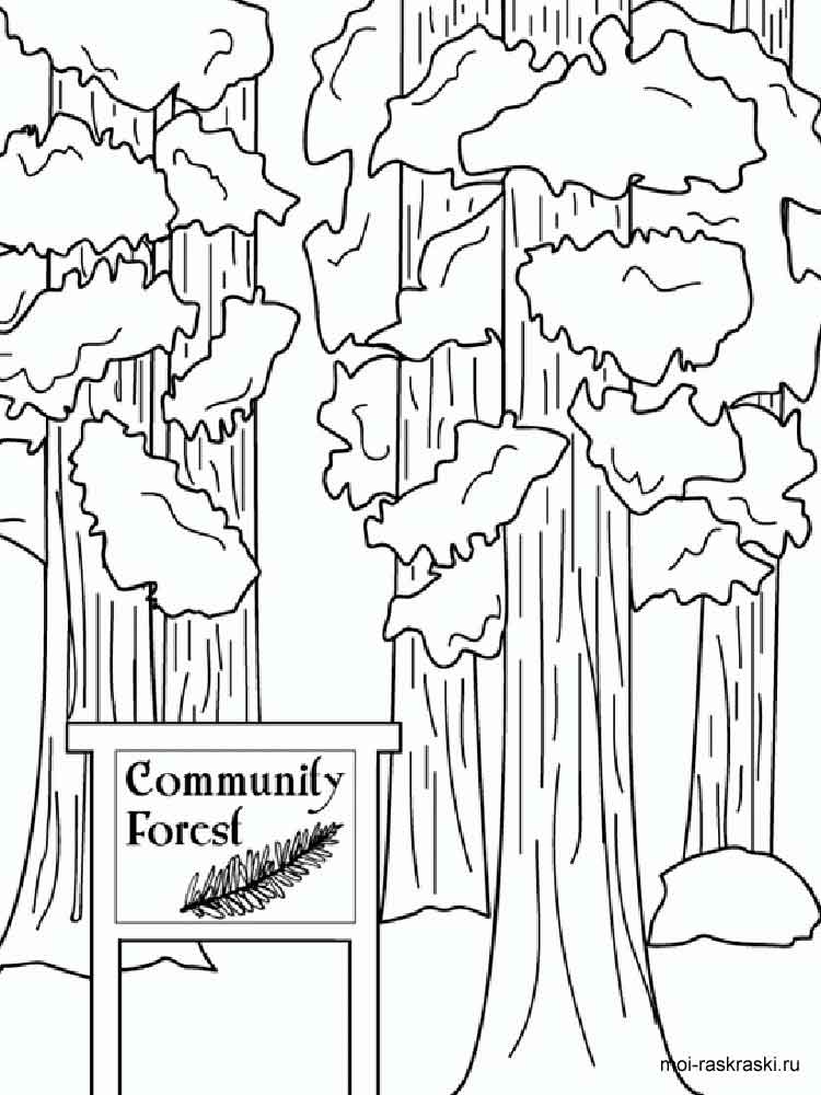 Giant Sequoia or Redwood coloring page | Free Printable Coloring ... | 1000x750