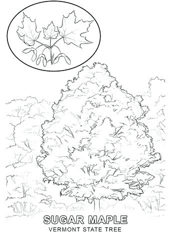 340x480 State Tree Coloring Page Stock Coloring Pages Coloring State Tree