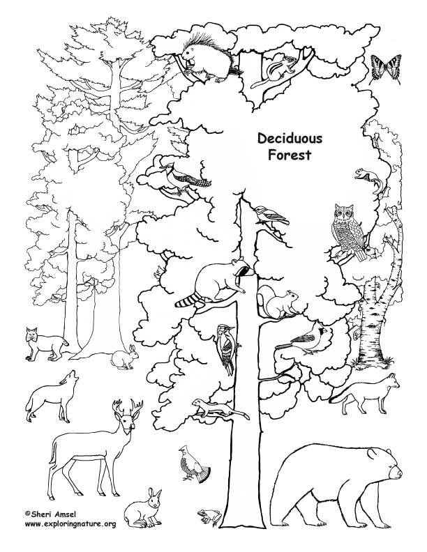 612x792 Temperate Forest Coloring Pages