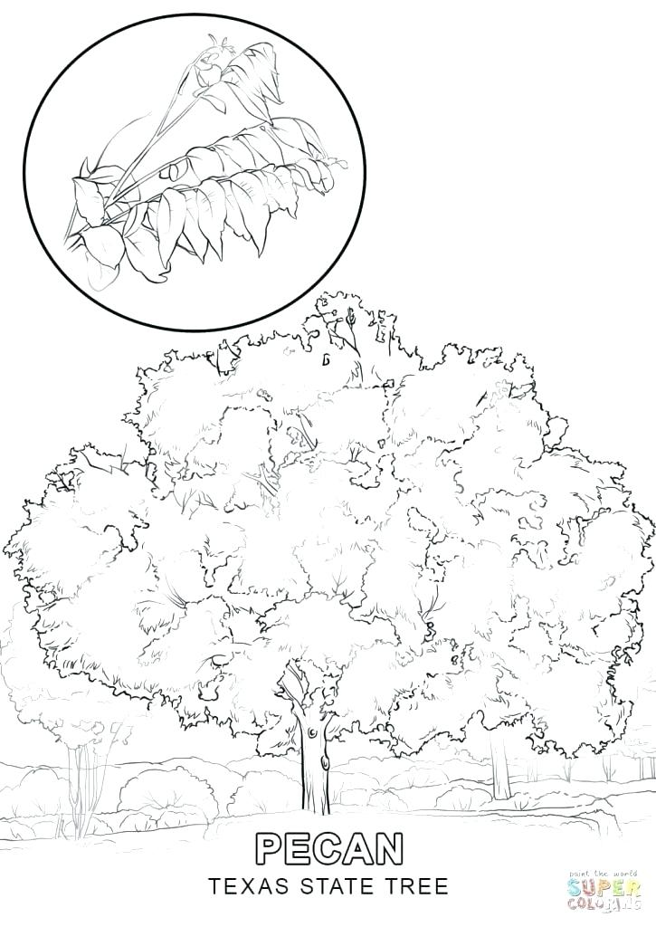 725x1024 Texas Symbols Coloring Pages Coloring Page State Symbols Coloring