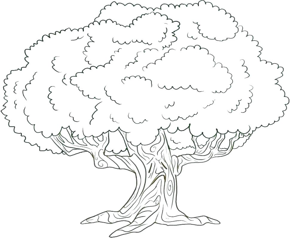 970x798 Trees Coloring Pages Pine Tree Coloring Pages Free