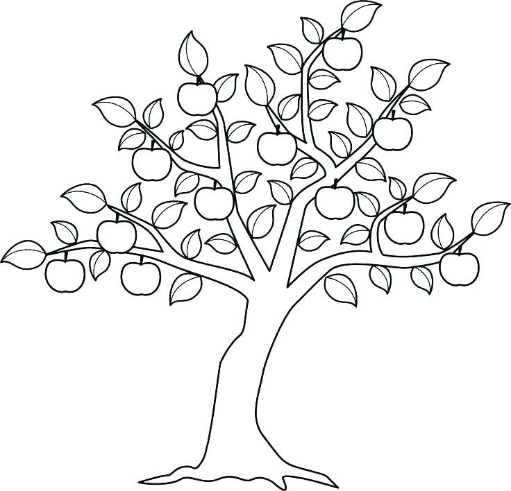 736x708 Trees Coloring Pages