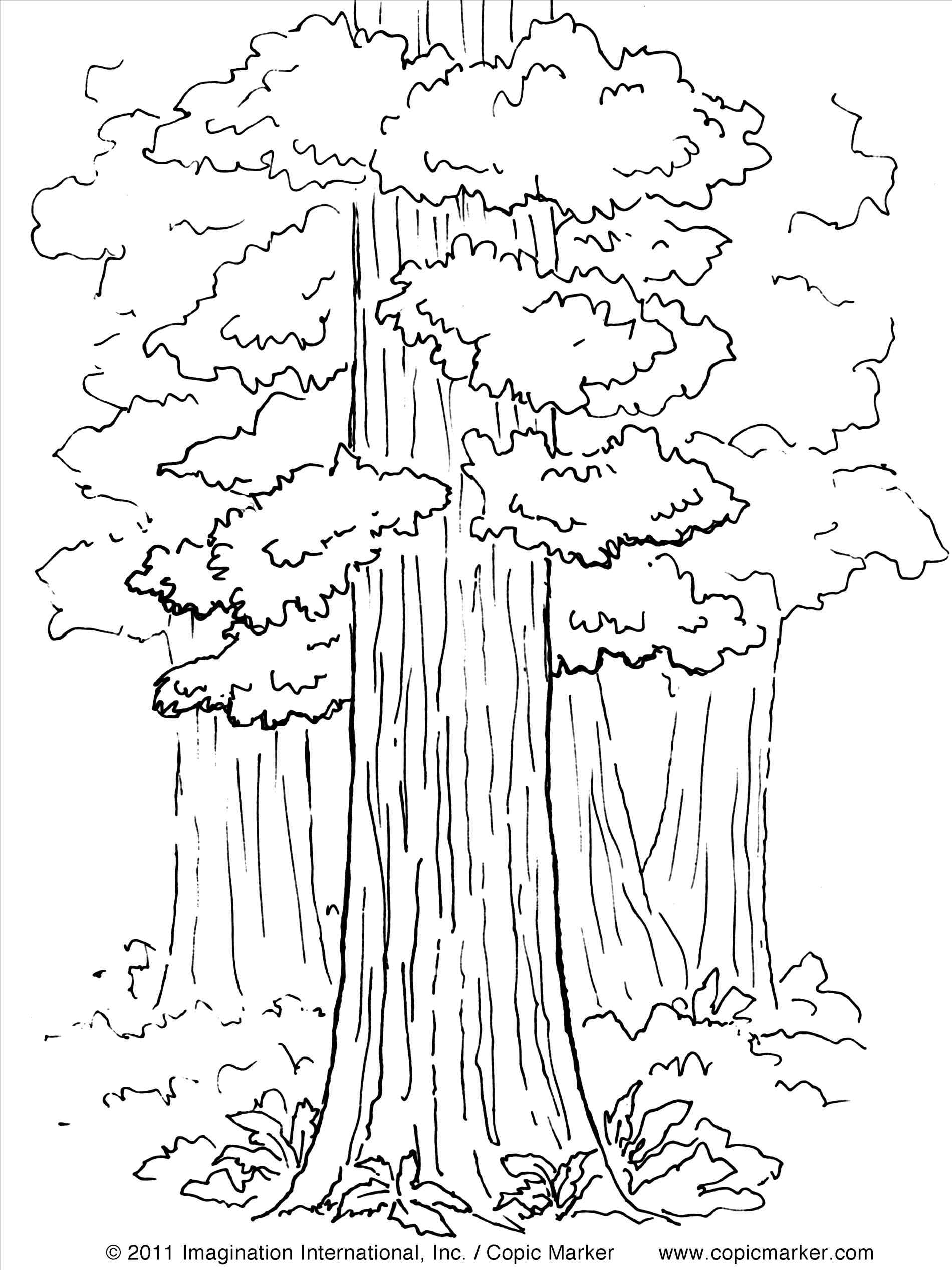 1900x2534 Giant Redwood Tree Next To Other Trees Coloring Pages Printable