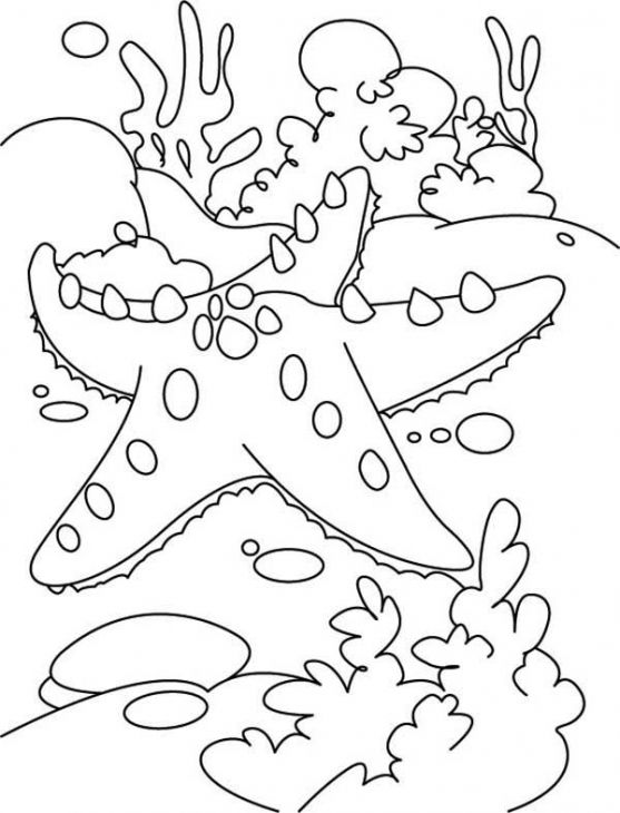 Reef Coloring Pages