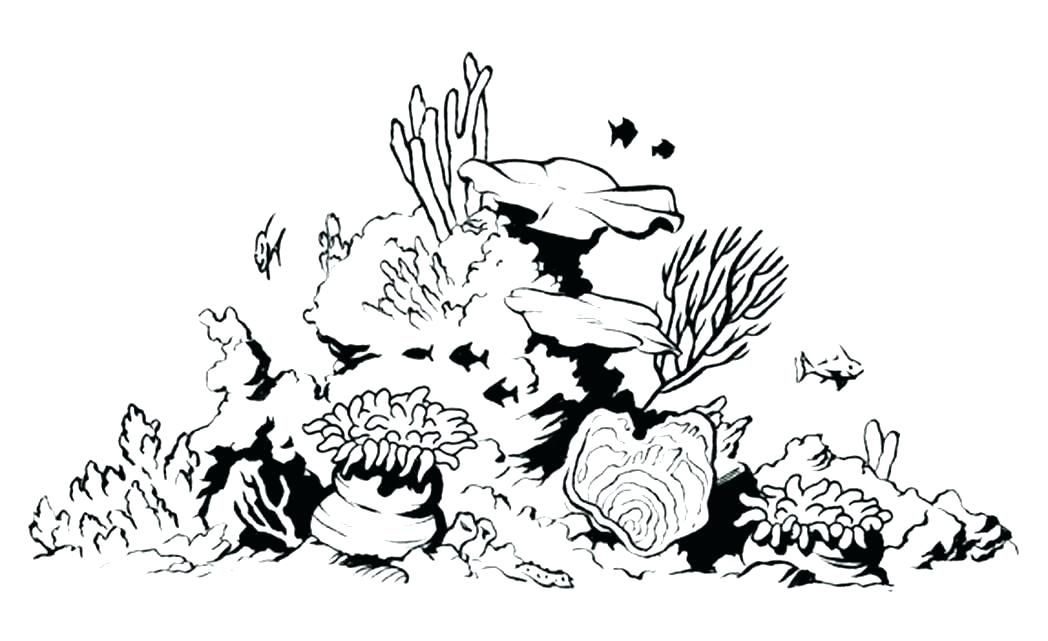 Images Of Coral Reef Coloring Page Sabadaphnecottage