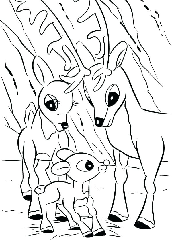 600x840 Realistic Reindeer Coloring Pages Professional