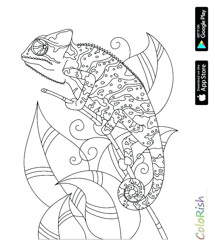 736x843 Reptile Coloring Pages Coloring Pages Of Reptiles Reptiles