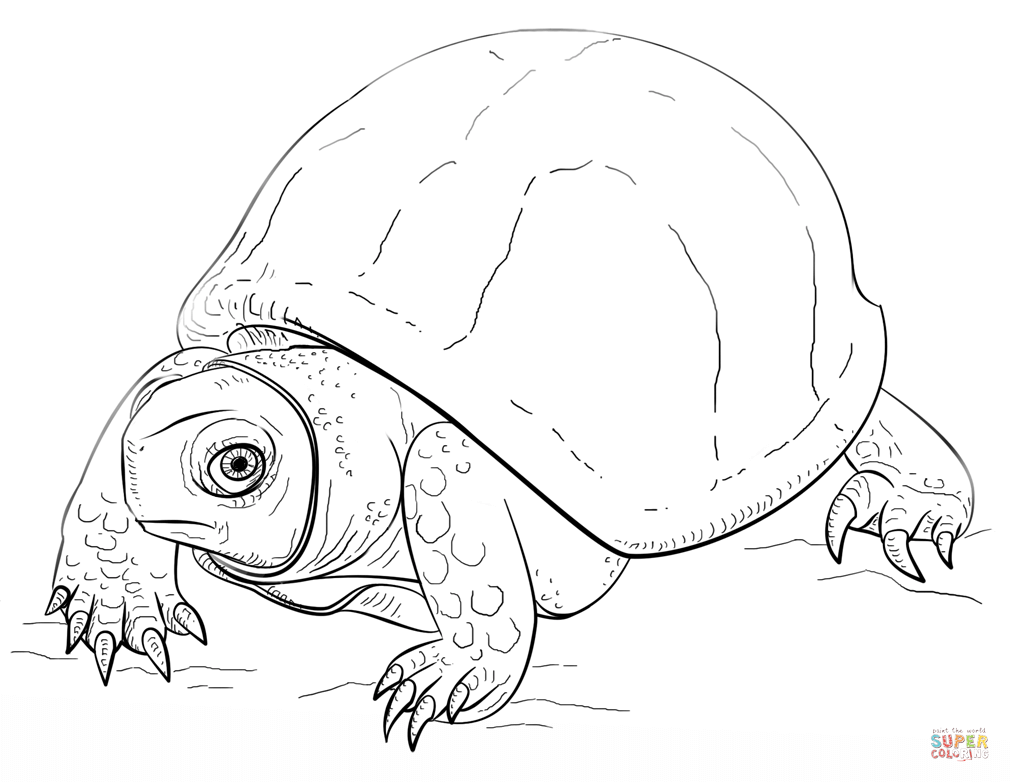 1010x782 Reptiles Coloring Pages