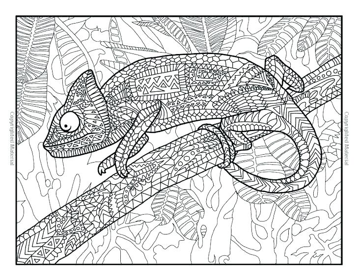 729x564 Reptiles Coloring Pages Animal Print Coloring Pages Reptile