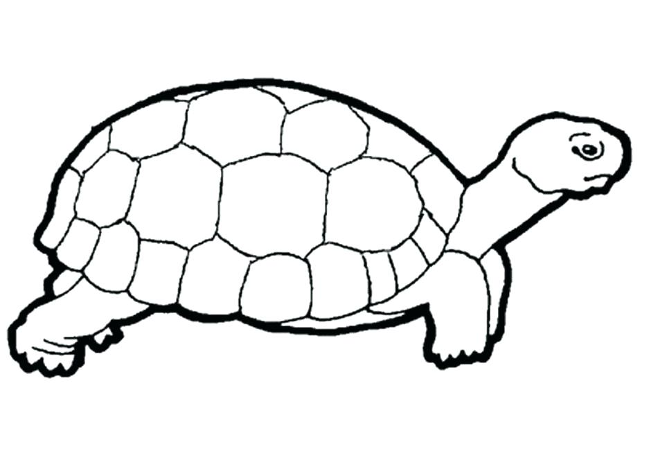 940x664 Reptiles Coloring Pages Educational Coloring Books Sea Turtle