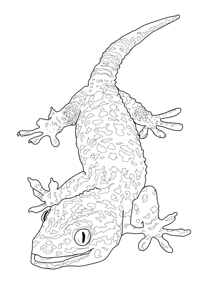 675x900 Reptile Coloring Pages