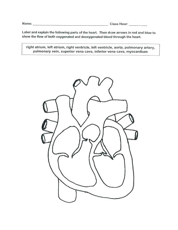 Respiratory System Coloring Page At Getdrawings Com