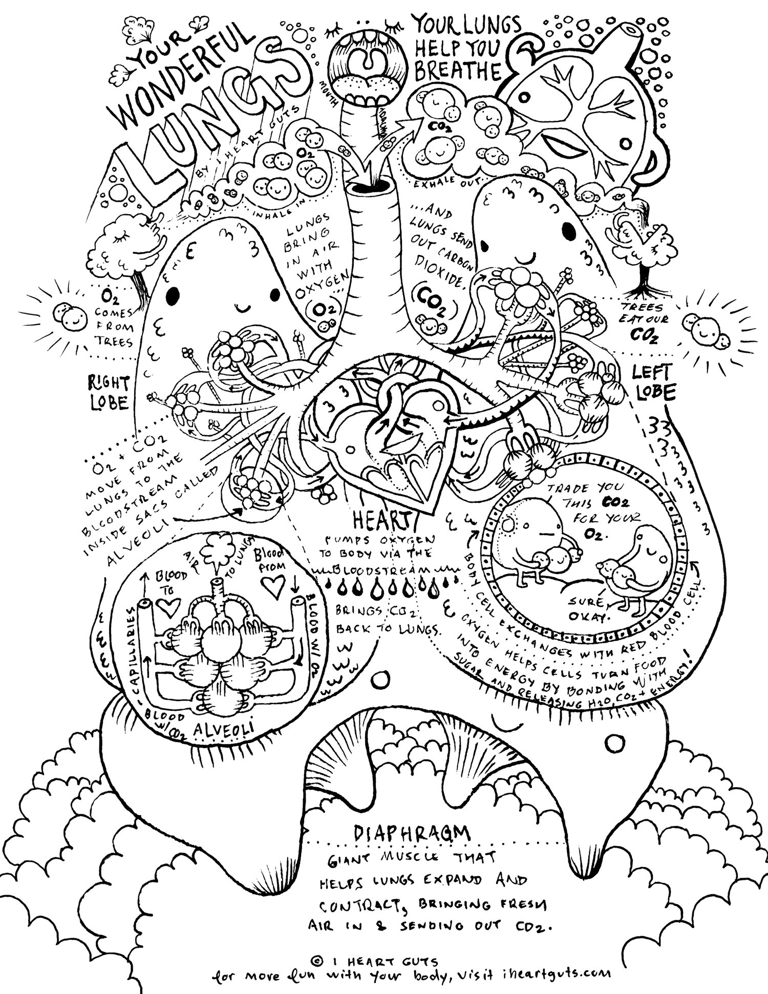 1500x1941 Respiratory System Coloring Page
