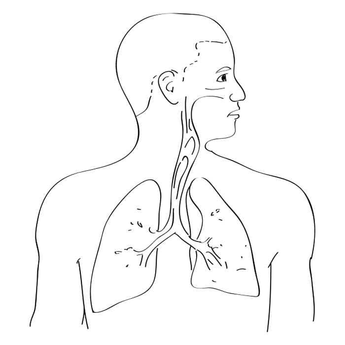 700x700 Colouring Pages Respiratory System Digestive Coloring Page Various