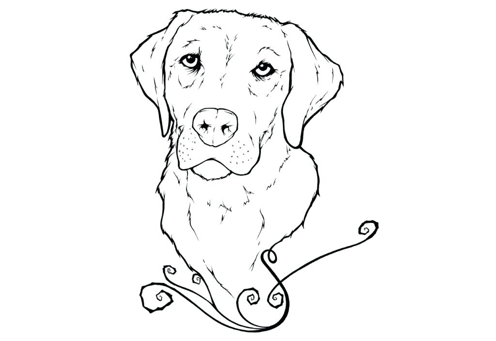 1024x704 Golden Retriever Coloring Pages Inspirational Photograph Of Golden
