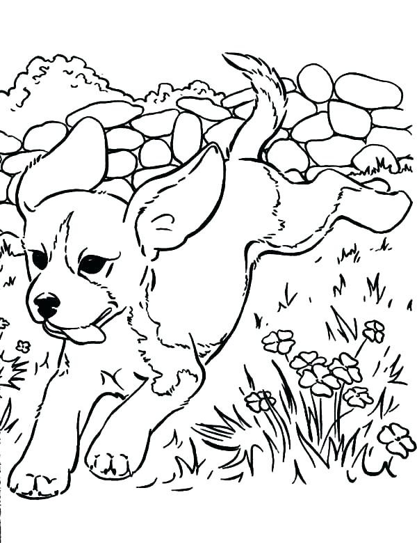 600x780 Lisa Frank Coloring Pages Frank Coloring Pages To Print Golden
