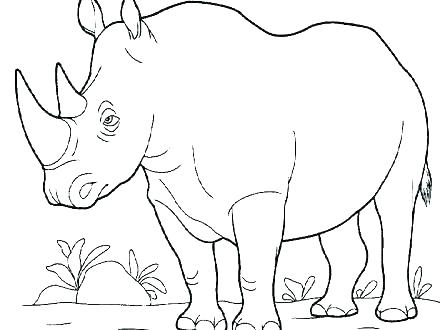 440x330 Rhino Coloring Pages Rhino Coloring Page Rhino Coloring Page