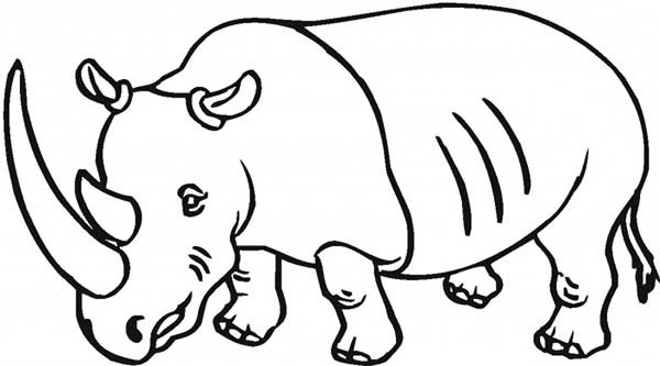 600x333 Drawing Rhino Coloring Pages On Rhino Coloring Page