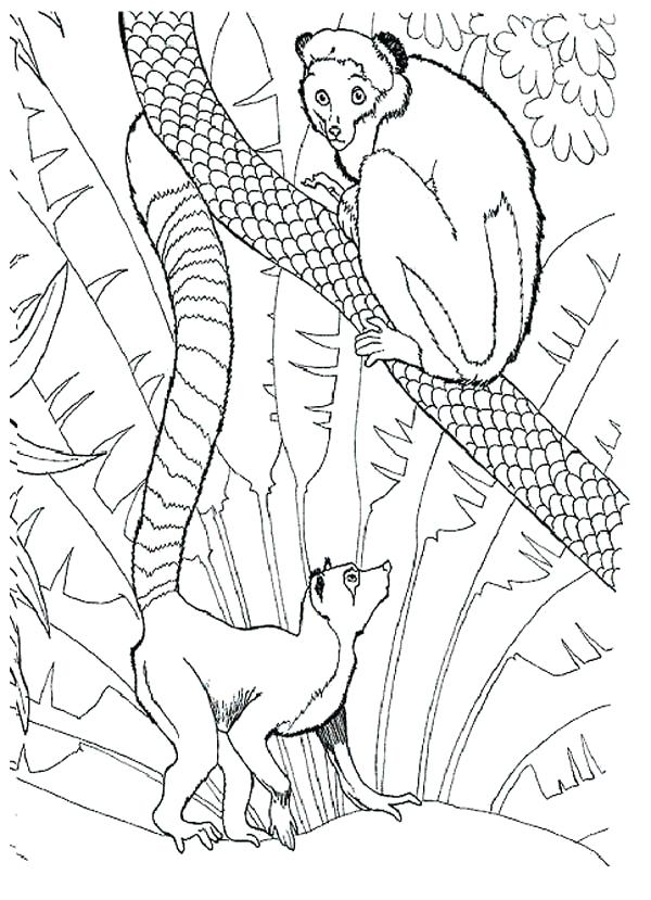 600x829 Lemur Coloring Page Click To See Printable Version Of Red Ruffed