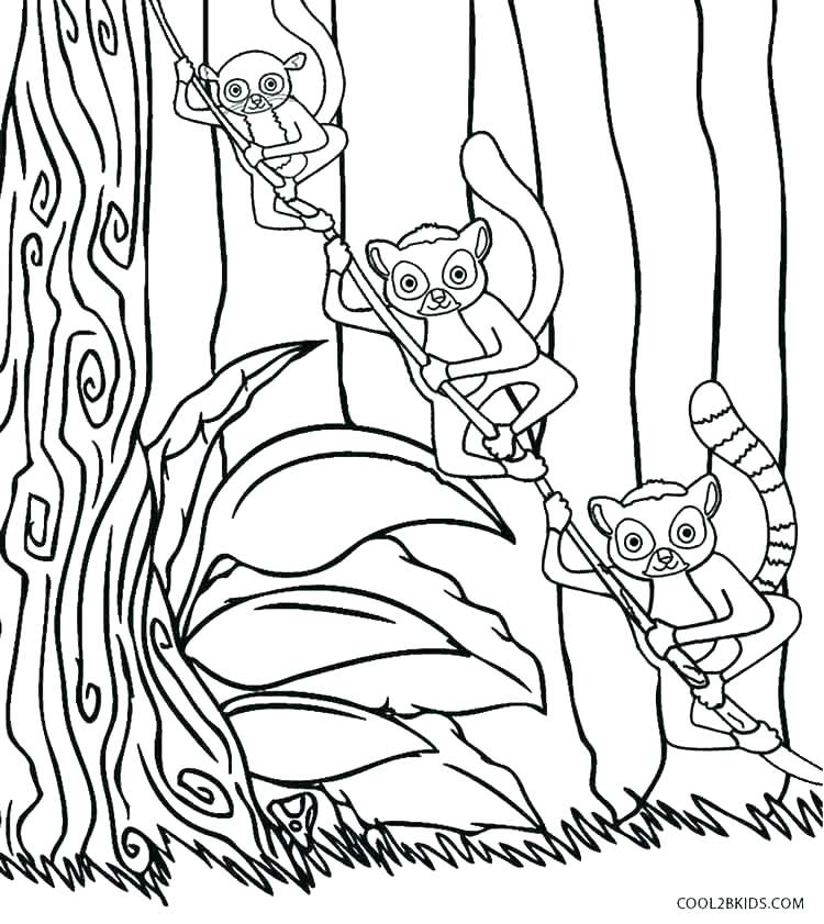 750x841 Lemur Coloring Page Country Coloring Pages Country Coloring Pages