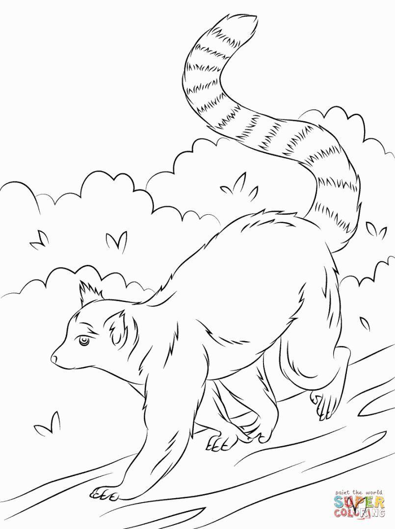 805x1079 Lemur Coloring Pages Coloring Pages Lemur
