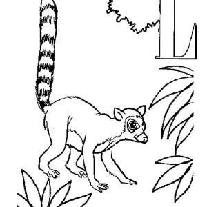 300x300 Little Ring Tailed Lemur Coloring Page Color Luna