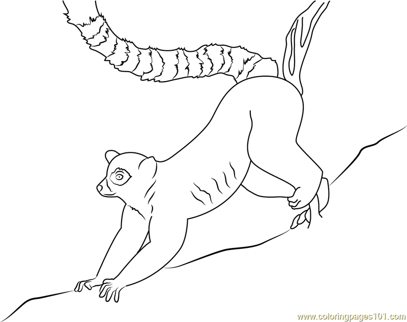 800x634 Ring Lemur Coloring Page