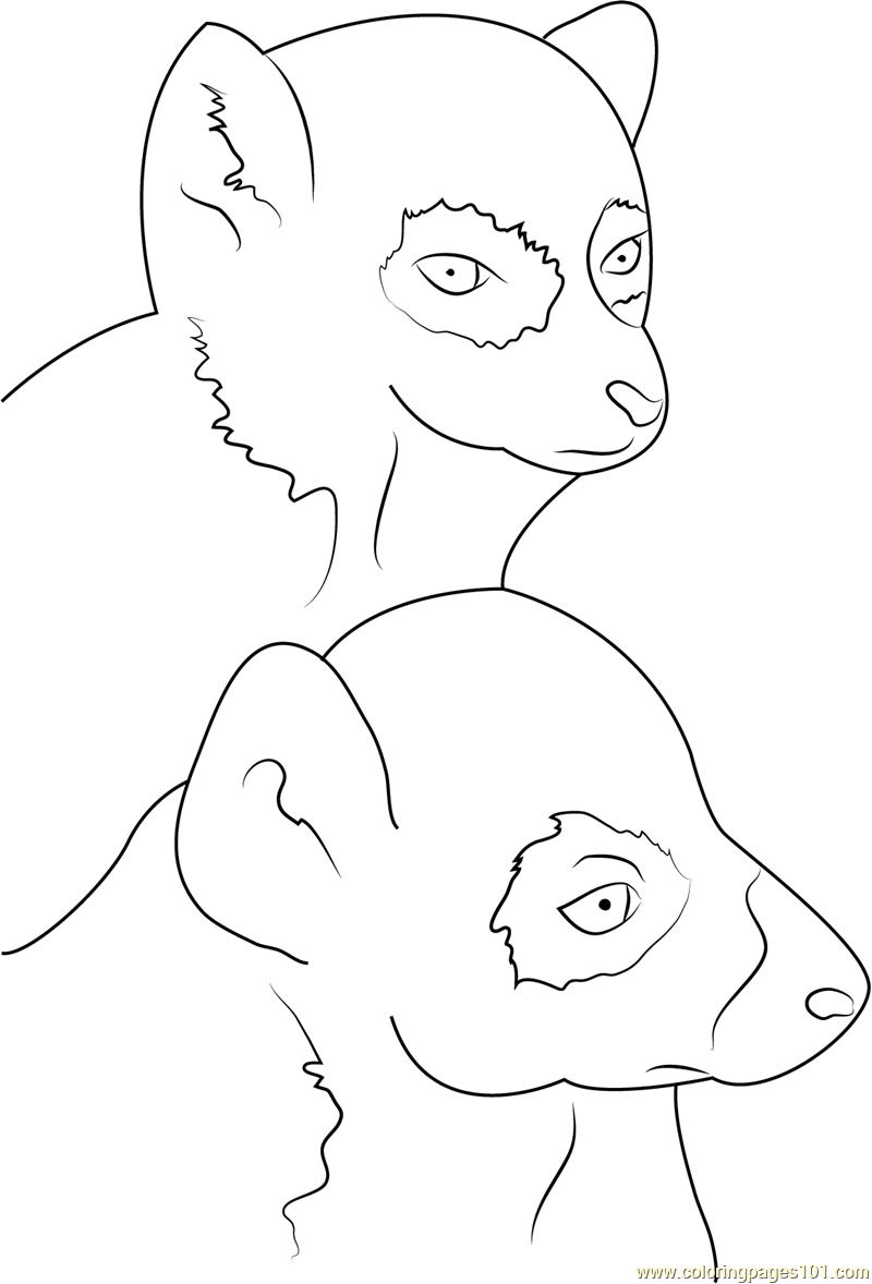 800x1178 Ring Tailed Lemur Face Coloring Page