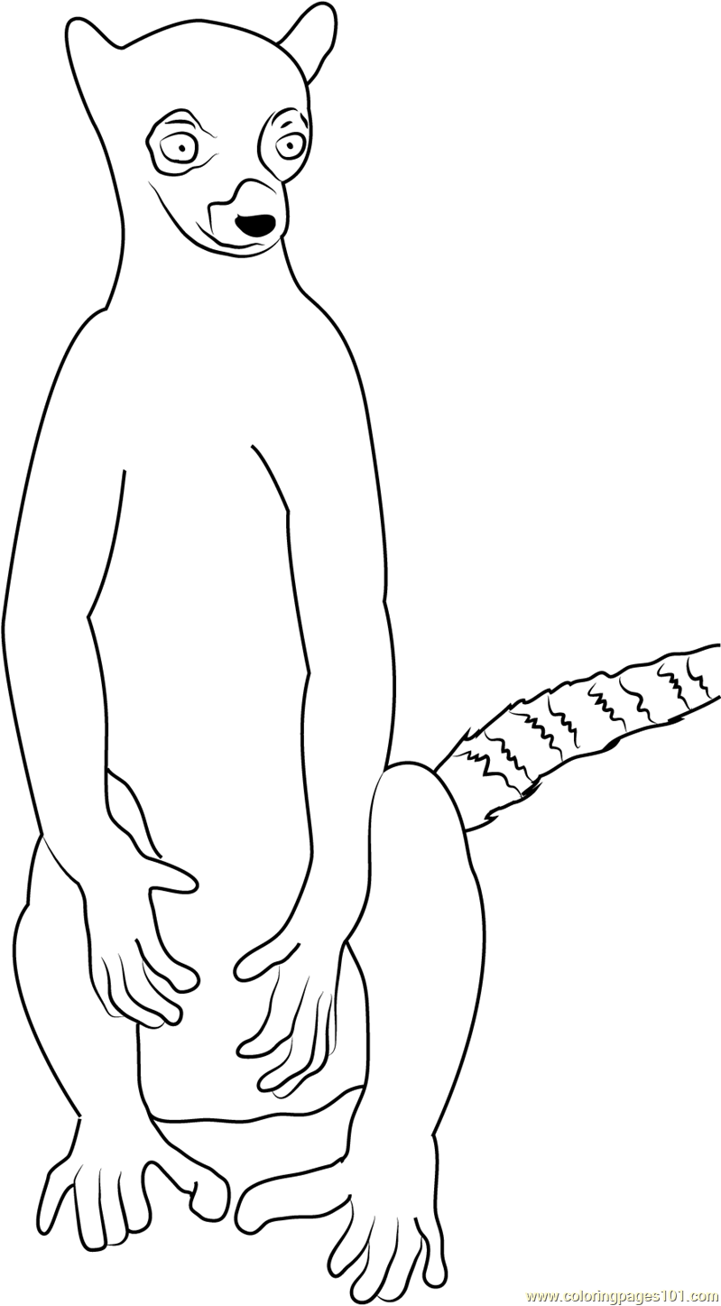 799x1447 La Ring Tailed Lemur Coloring Page