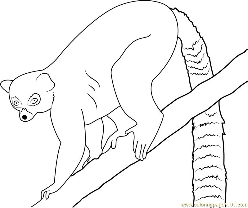 799x672 Lemur Coloring Page