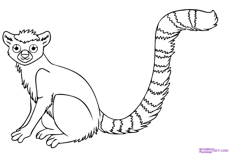 1500x1007 Lemur Coloring Page
