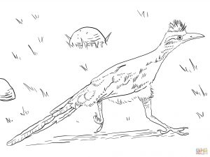 300x225 Greater Roadrunner Run Coloring Pages Download