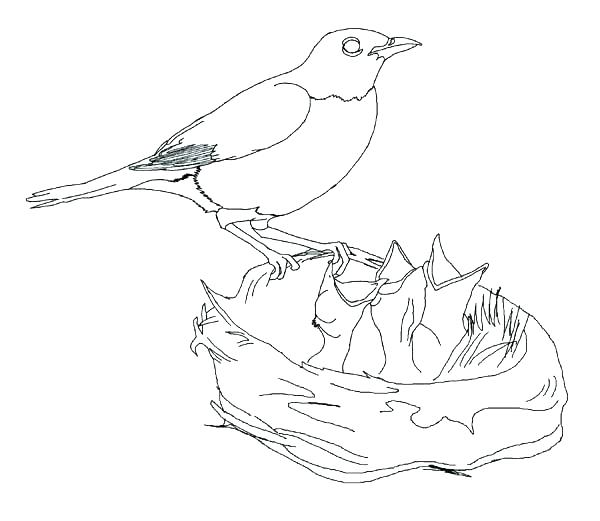 600x521 Robin Bird Coloring Pages Coloring Page Of A Bird Bird Coloring