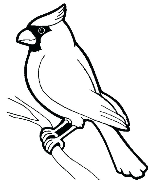600x751 Robin Coloring Pages Robin Coloring Page Robin Bird Coloring Pages