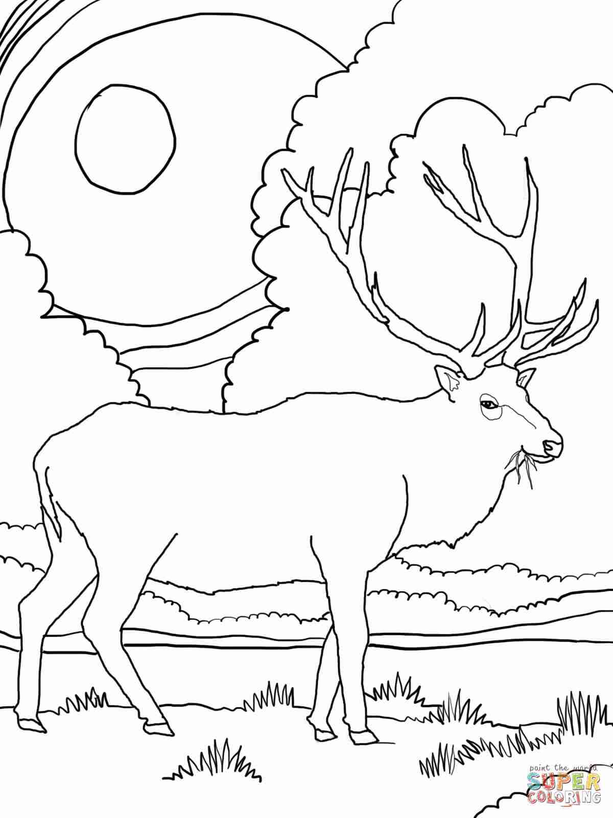 1200x1600 Rocky Mountain Elk Coloring Page Free Printable Pages Fair Olegratiy