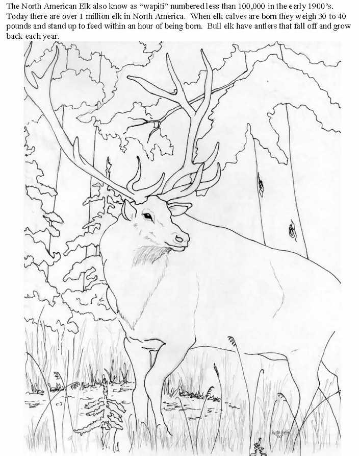 704x893 Free Coloring Pages Of Mountains Lovely Rocky Mountains Drawing