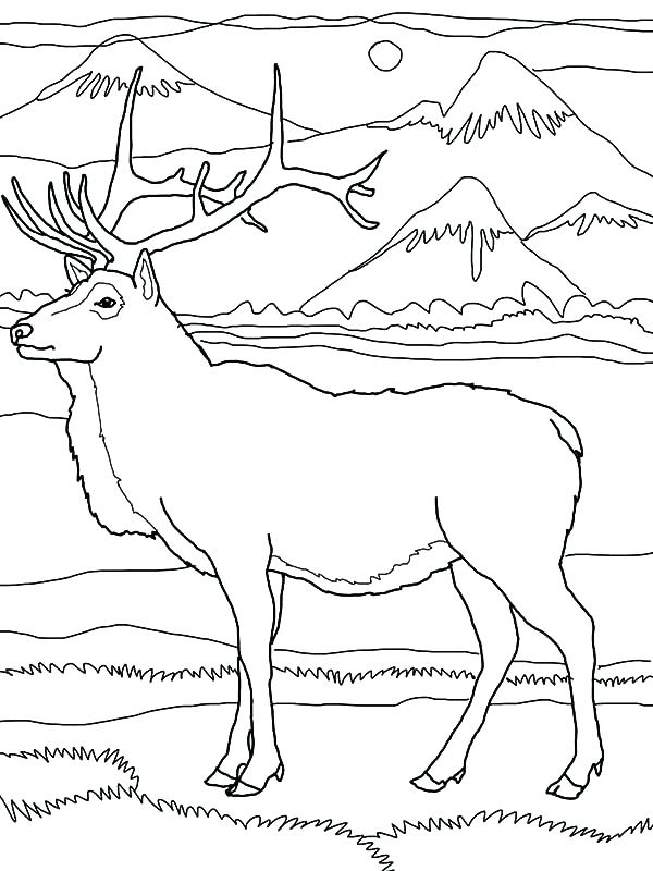 600x800 Mountains Coloring Page Mountain Lion Coloring Pages Mountain