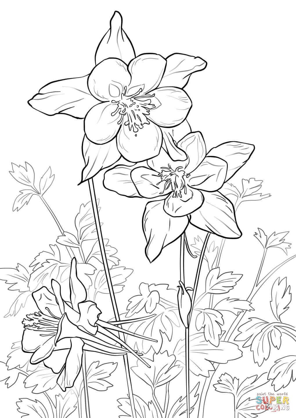 1020x1440 Rocky Mountain Columbine Coloring Page Free Printable Coloring