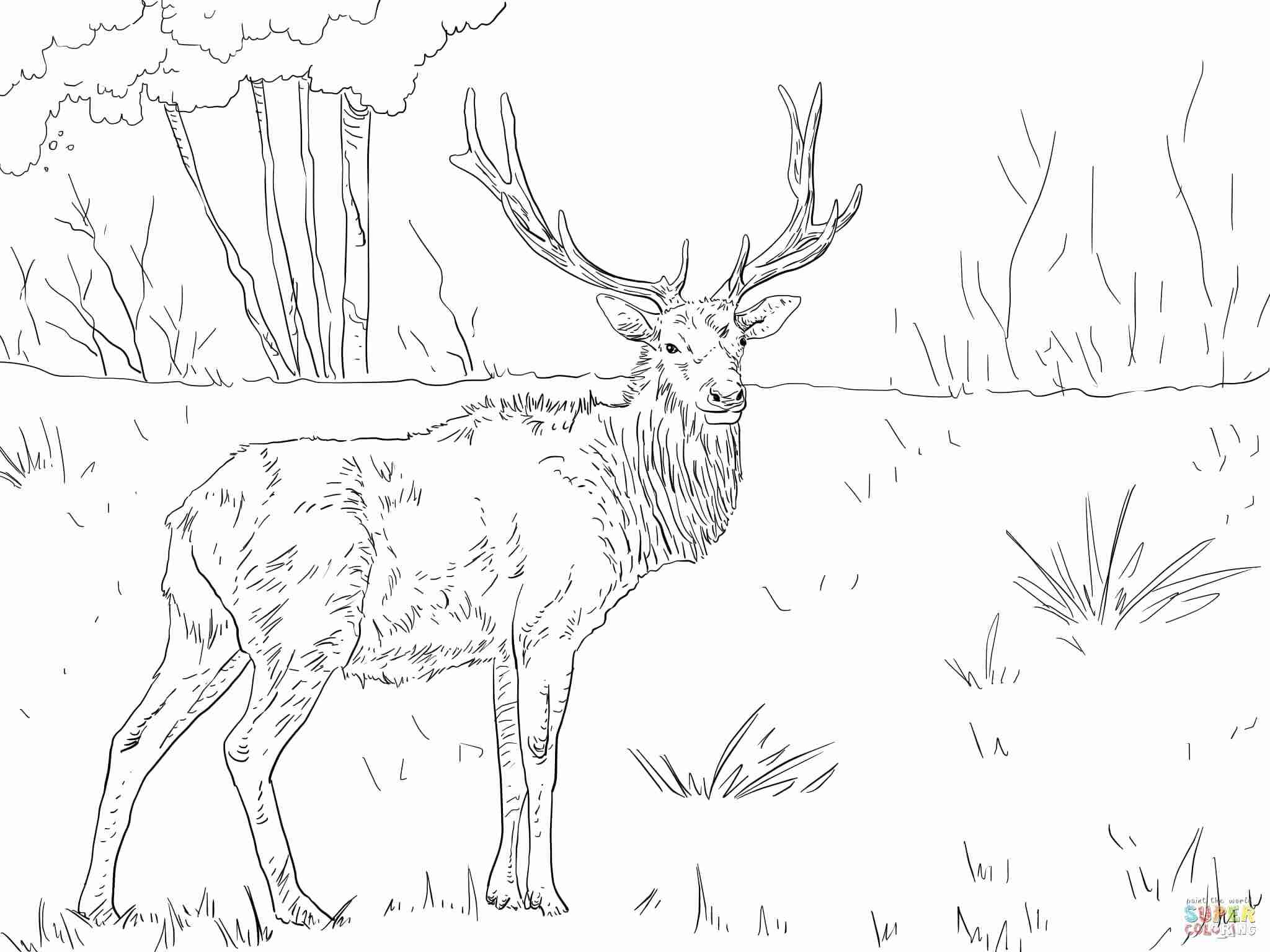 2048x1536 Rocky Mountain Elk Coloring Page Free Printable Pages Fair Olegratiy