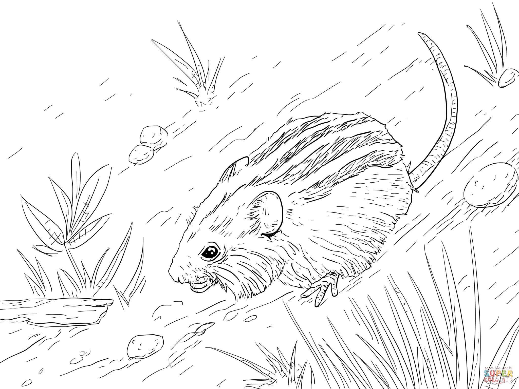 2048x1536 Extraordinary Striped Mouse Coloring Page About Mouse Coloring