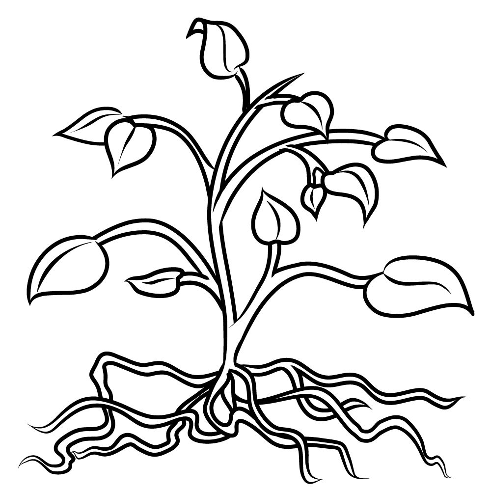 1000x1000 Fascinating Perfect With Roots On Coloring Picture For Flower Page
