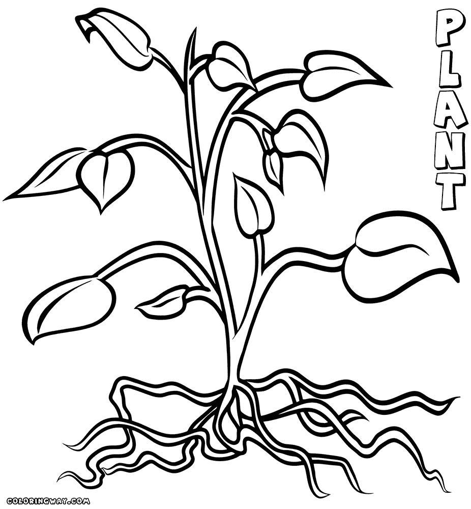 926x1000 Inspiring Coloring Page Flower With Roots Simple Image For Style