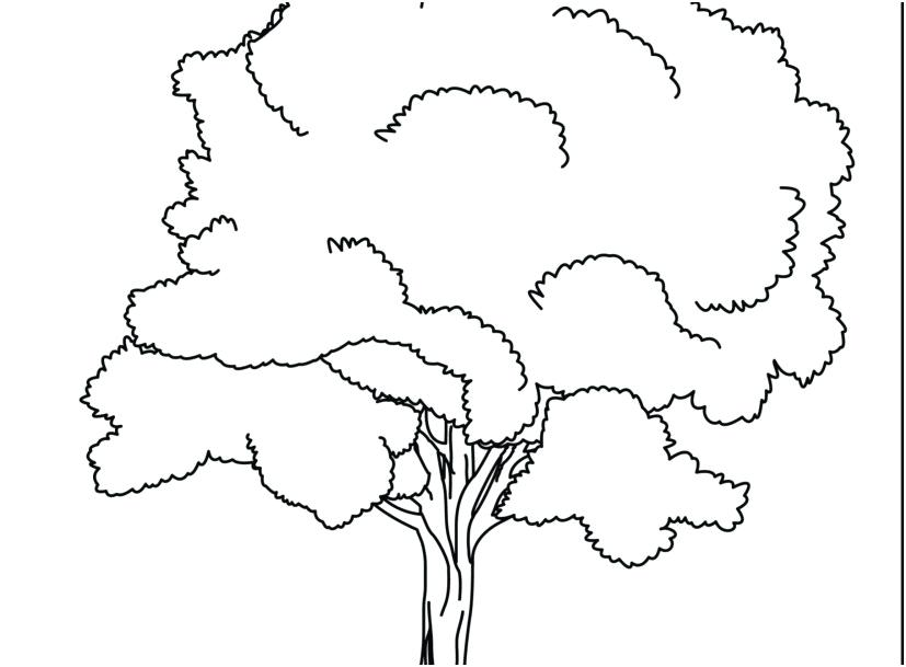 827x609 Tree Coloring Pages Remarkable Tree Leaves Coloring Pages