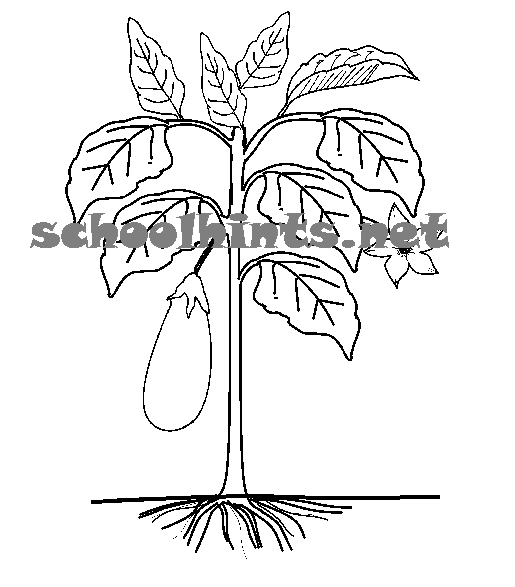 1036x1180 Tree Coloring Pages With Roots And Stems Gallery Coloring