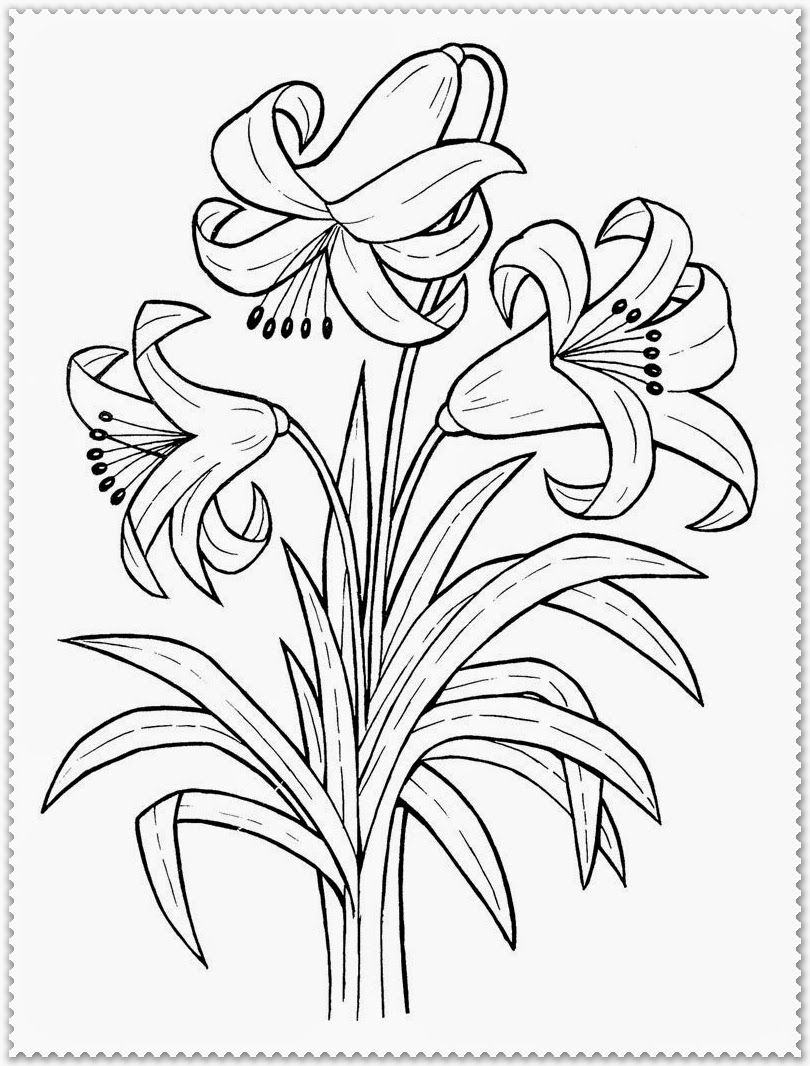 810x1066 Astonishing Realistic Flower Coloring Page Picture Of Roots Ideas