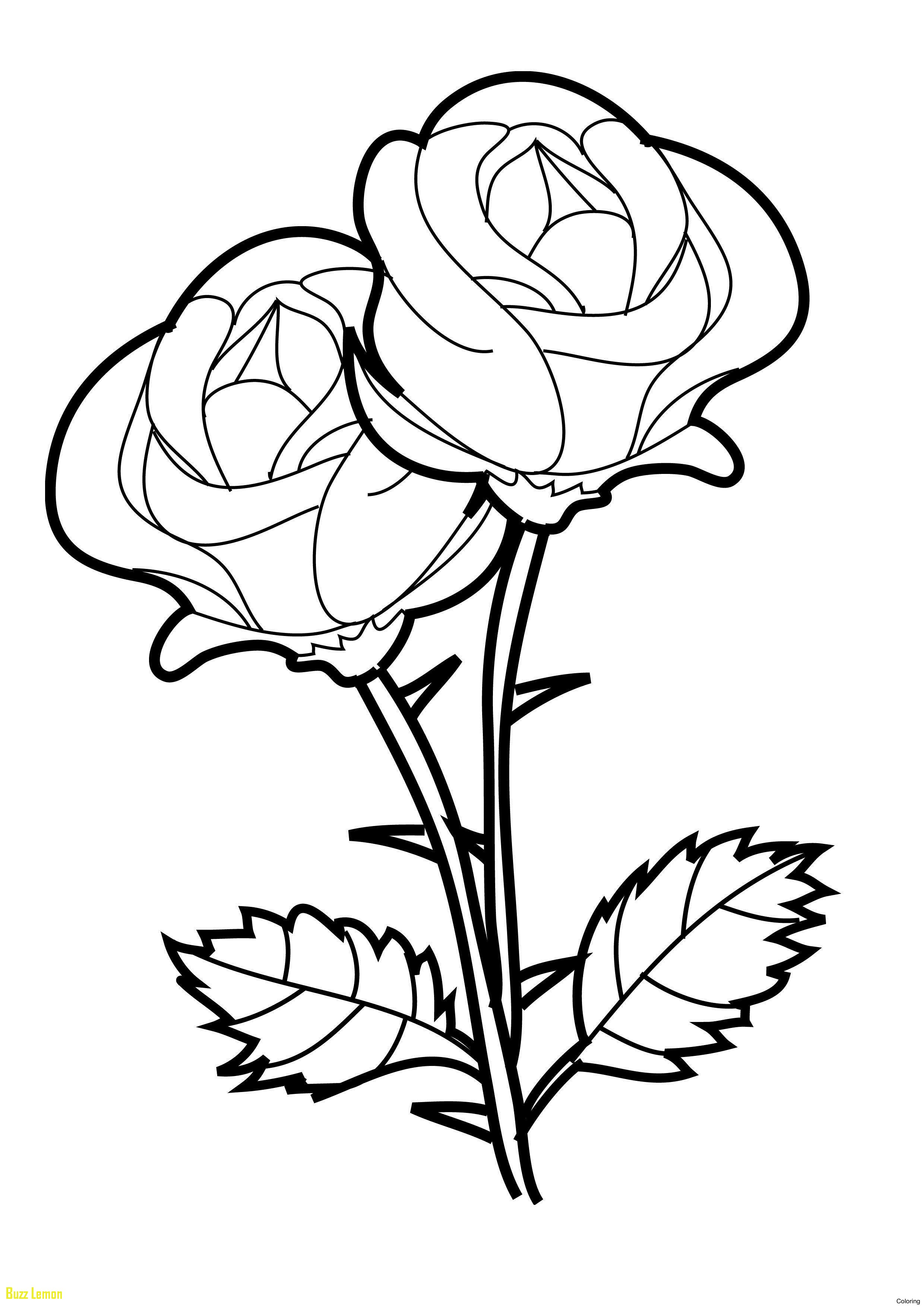2480x3508 Rose Colored Sheets Unique Rose Coloring Pages For Kids Roses