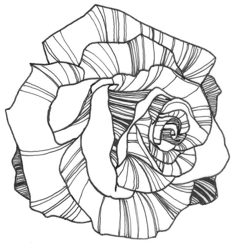 750x780 Rose Coloring Books Coloring Rose Coloring Pages Easy Also Rose