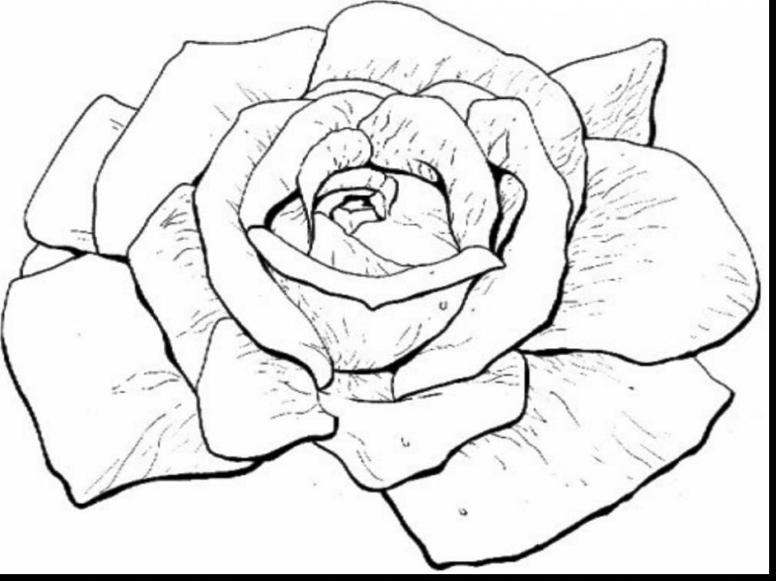 1126x844 Fascinating Coloring Page Of A Rose Coloring For Sweet Exploit